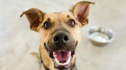 Feeding Raw Meat Diet To Your Pets Could Be Dangerous