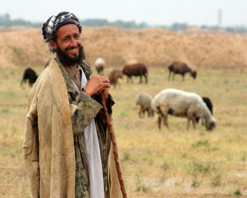 Afghan Shepherd, by ironpaw_1