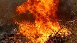 Brandstifter im Federkleid: Einige australische Vögel legen gezielt