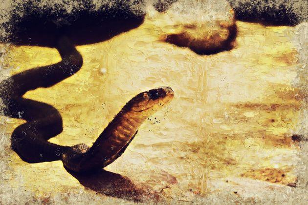 Σπάνιο, δηλητηριώδες θαλάσσιο φίδι ξεβράστηκε στις ακτές της νότιας