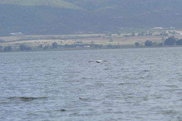 Συνεχίζονται οι έρευνες στη λίμνη Βόλβη για τον εντοπισμό των δύο ψαράδων. Βρέθηκε η βάρκα