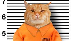 Κρατούμενες ζητούν βοήθεια για τις κατοικίδιες γάτες