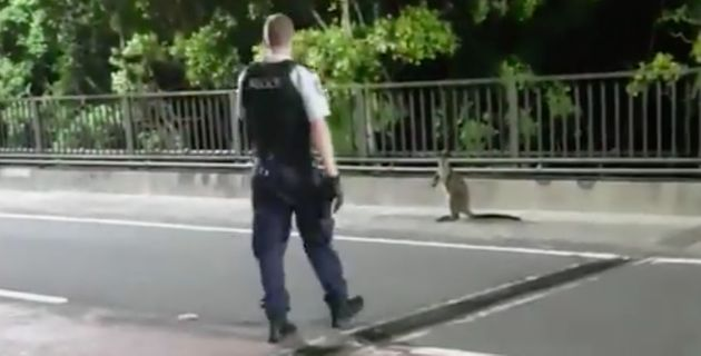 A wayward wallaby was captured by police early on Tuesday after bounding across the iconic Sydney...