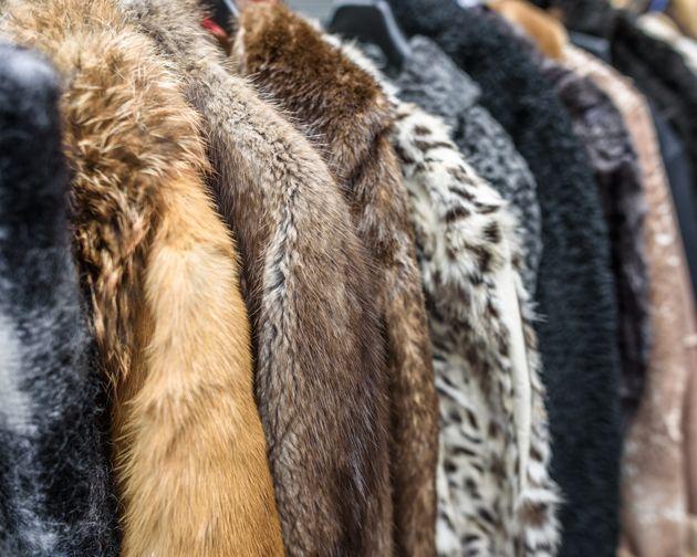 Τέλος εποχής για τη γούνα. Η Νορβηγία κλείνει τις φάρμες