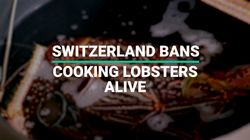 Can Lobsters Feel Pain? Switzerland Bans The Cooking Of Live