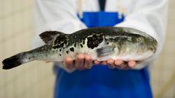 Πανικός σε ιαπωνική πόλη λόγω πώλησης δηλητηριωδών ψαριών σε σουπερμάρκετ κατά
