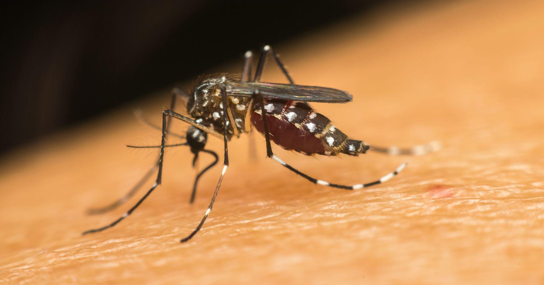 Molecular Docking Based Screening of Plant Flavonoids as Dengue NS1 Inhibitors