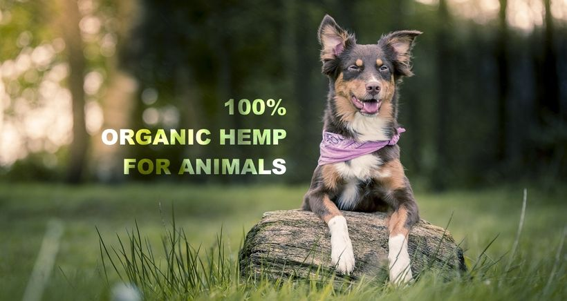 <em>Why Use CBD to Treat Dogs and Other Animals</em>