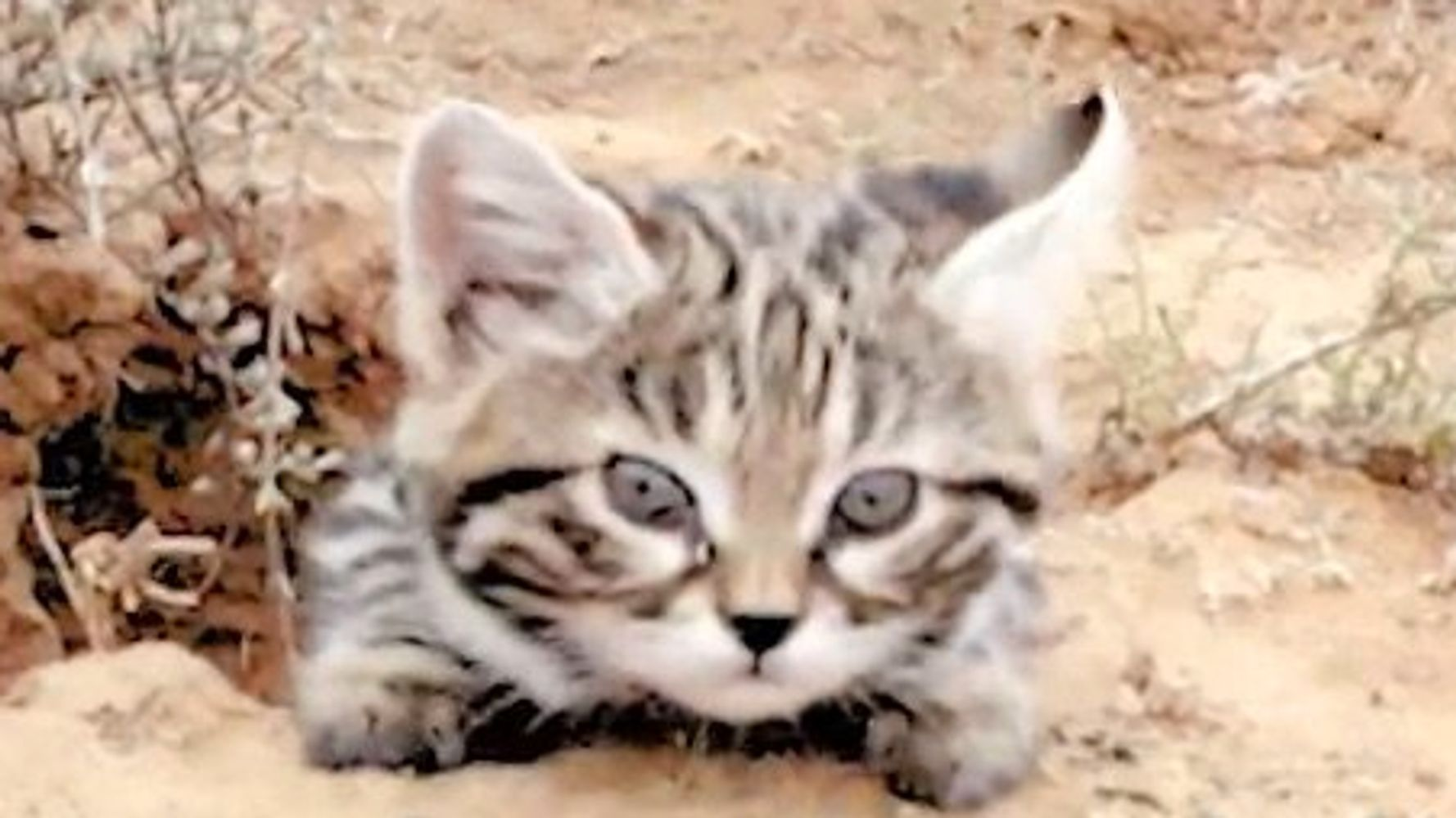 The World's Deadliest Cat Is Absolutely Adorable | HuffPost
