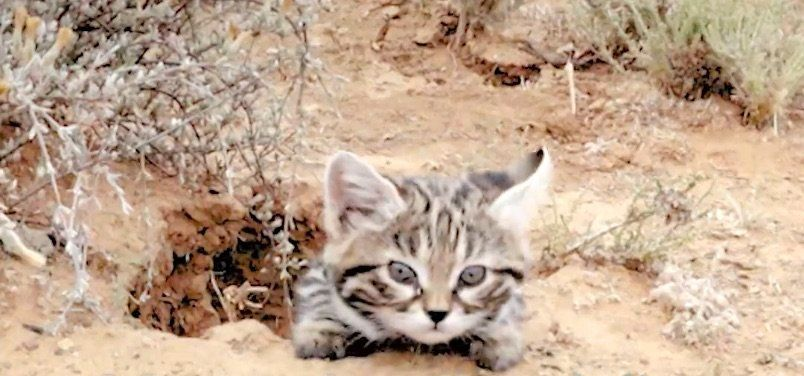 The World's Deadliest Cat Is Absolutely Adorable