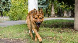 Tödliche Schlange geht auf Mädchen los, aber sie hat nicht mit diesem Hund gerechnet