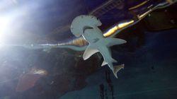 Και όμως, υπάρχει καρχαρίας που είναι (και)