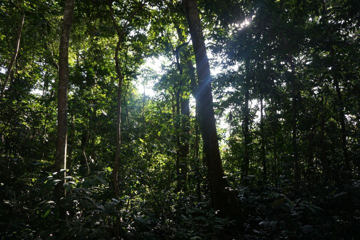 Zika Forest in Uganda, where the Zika virus was first identified in 1947. It remains a research site.