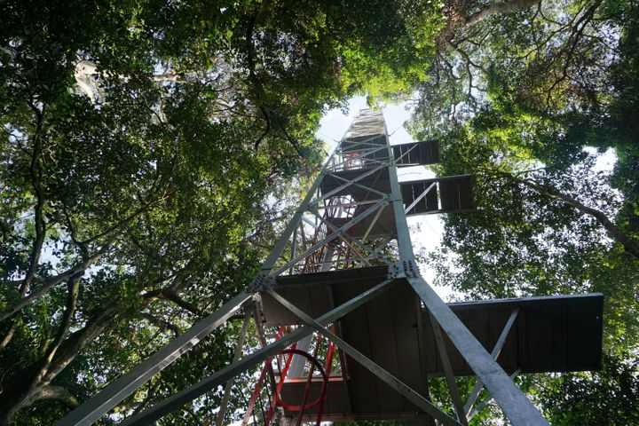 A  118-foot-high tower in Zika Forest, used for collecting mosquitoes and blood samples from monkeys to test for viruses