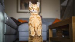 Αν έγραφε ο γάτος σας, θα το έκανε με το αριστερό του πόδι. Αυτό τουλάχιστον υποστηρίζει νέα