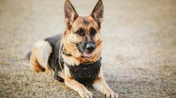 ΗΠΑ: Άνδρας δάγκωσε σκύλο σε επιχείρηση της