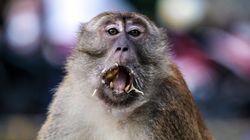 Weltsensation: Forschern gelingt es erstmals, einen Affen zu klonen