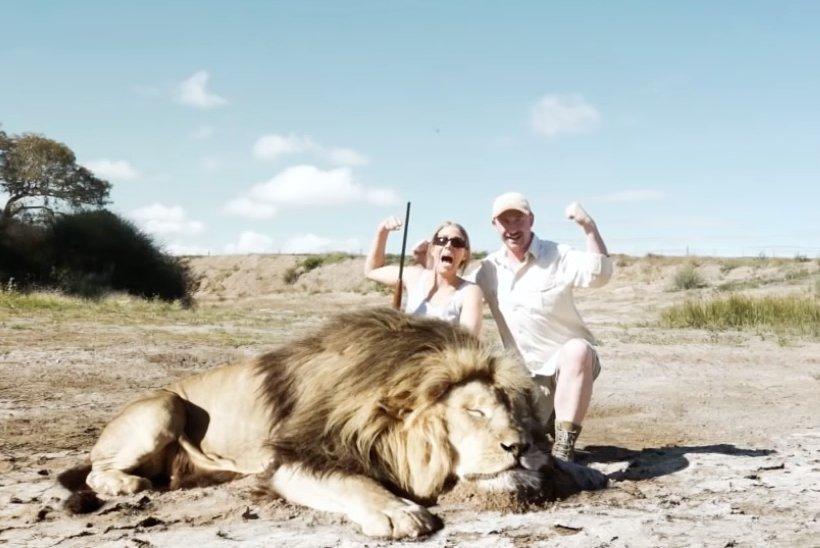 Trophäenjäger posieren für Foto mit totem Löwen – dann schlägt die Natur zurück
