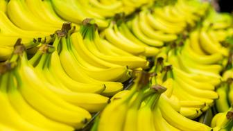 Beautiful organic bananas are displayed in a supermarket or farmer's market.