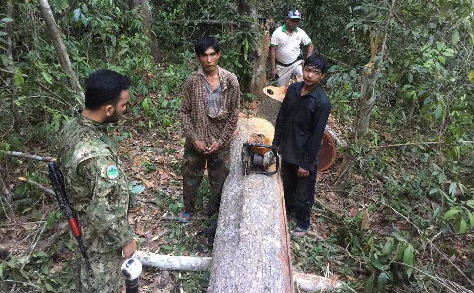 PLCN patrollerscatch illegal loggers cutting down trees in the Prey