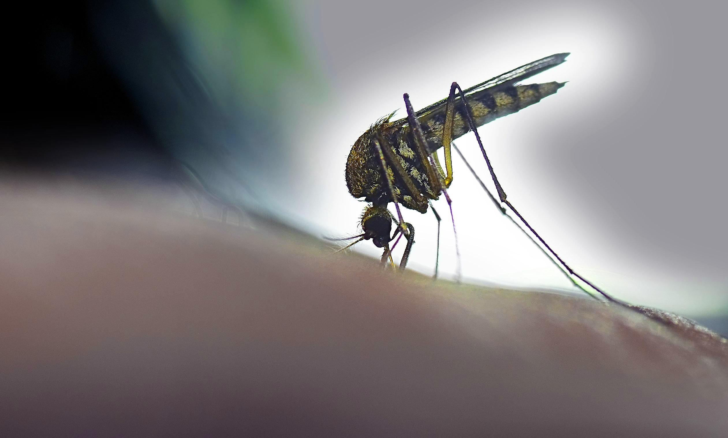 Studie: Wie ihr euch ohne Gift gegen Mücken wehren könnt