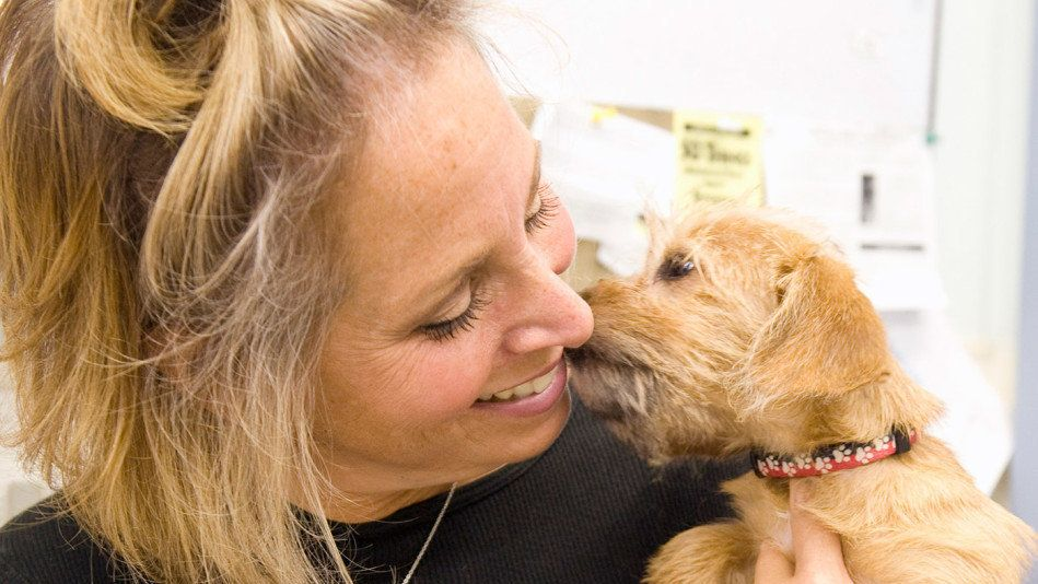 The 3 Best Ways to Help Homeless Animals if You Can't Adopt