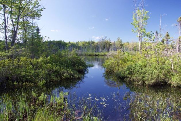Little Pond, located in Royalston, Mass., was among 642 ponds or lakes in North America and Europe from...
