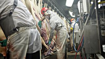 Employees remove internal organs from pigs at a Smithfield Foods Inc. pork processing facility in Milan, Missouri, U.S., on Wednesday, April 12, 2017. WH Group Ltd. acquired Virginia-based Smithfield, the world's largest pork producer, in 2013 for $6.95 billion. As Smithfield can't export sausage, ham and bacon from its U.S. factories, because China prohibits imports of processed meat, WH Group opened an 800 million-yuan ($116 million) factory in Zhengzhou that will produce 30,000 metric tons of those meats when it reaches full capacity next year. Photographer: Daniel Acker/Bloomberg via Getty Images