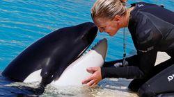 범고래는 인간의 말을 흉내낼 수