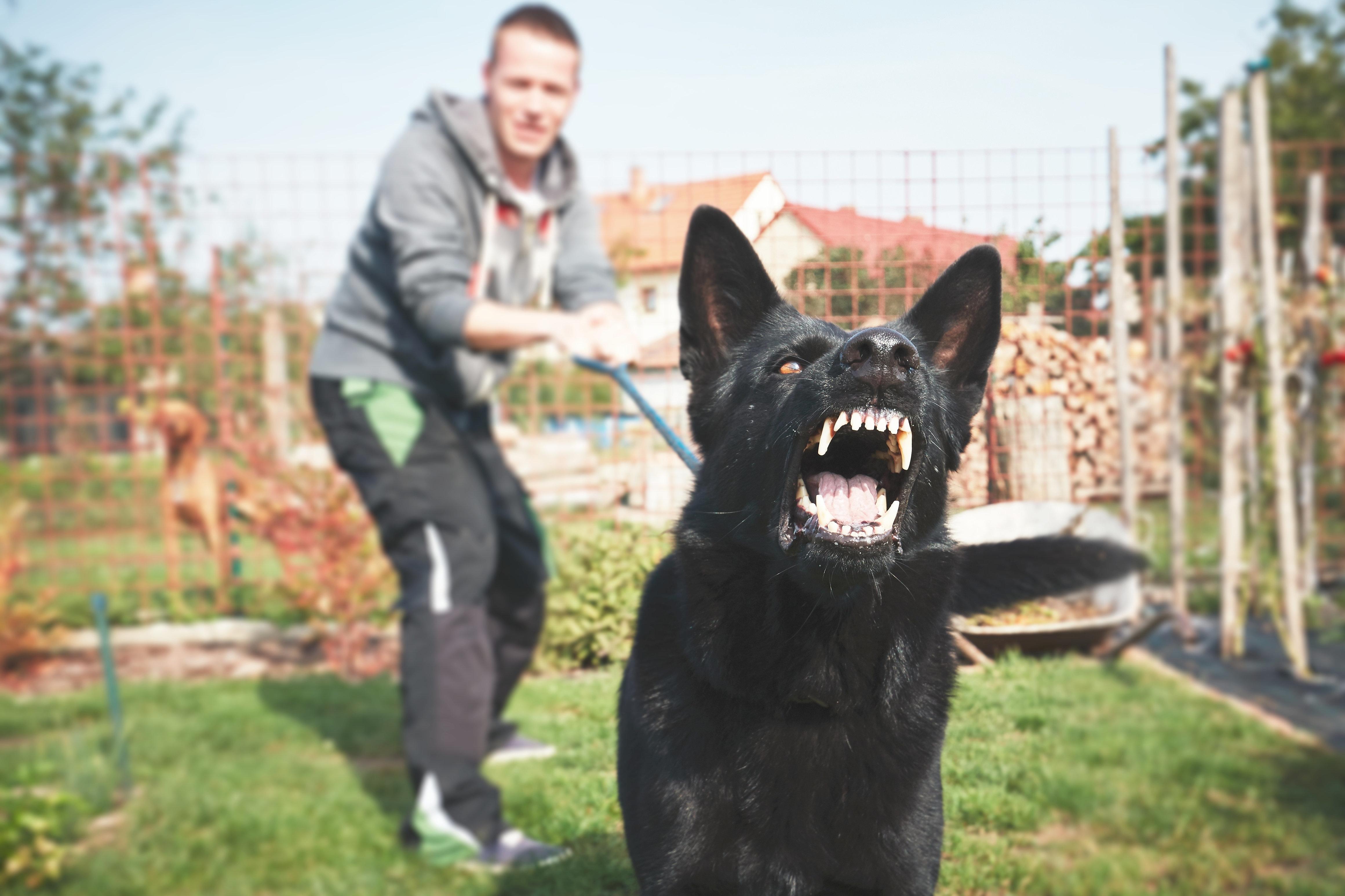 Αν είστε άνδρας και μάλιστα νευρωτικός, οι πιθανότητες να σας δαγκώσει ένας σκύλος