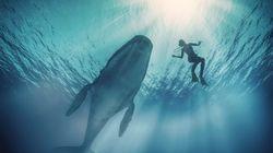Δύτες έρχονται τετ α τετ με φάλαινα 14 μέτρων και έχουν την πιο απίστευτη