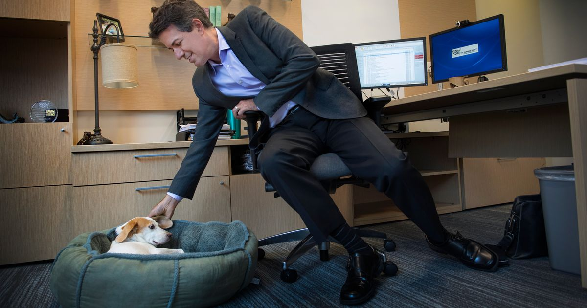 Humane Society CEO Resigns Amid Sexual Harassment Allegations