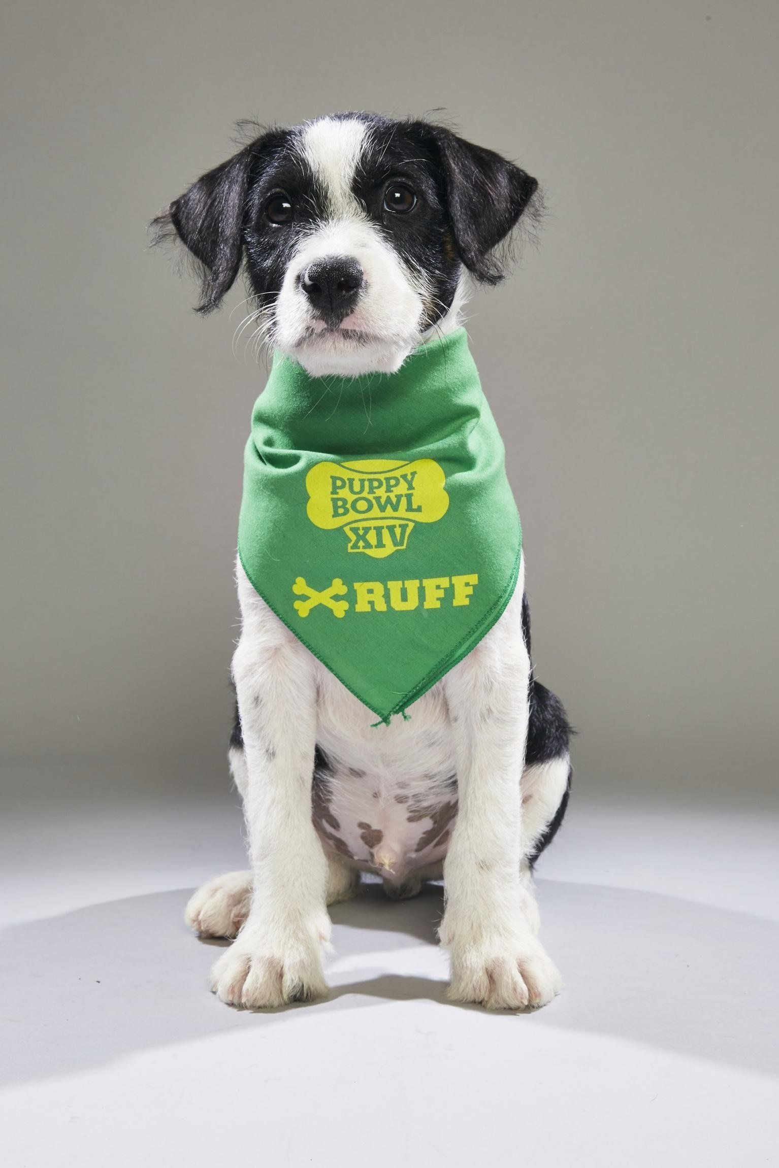 "Archer, now known as Maddox, is slated as a <a href=""http://www.animalplanet.com/tv-shows/puppy-bowl/photos/puppy-bowl-xiv-ba"