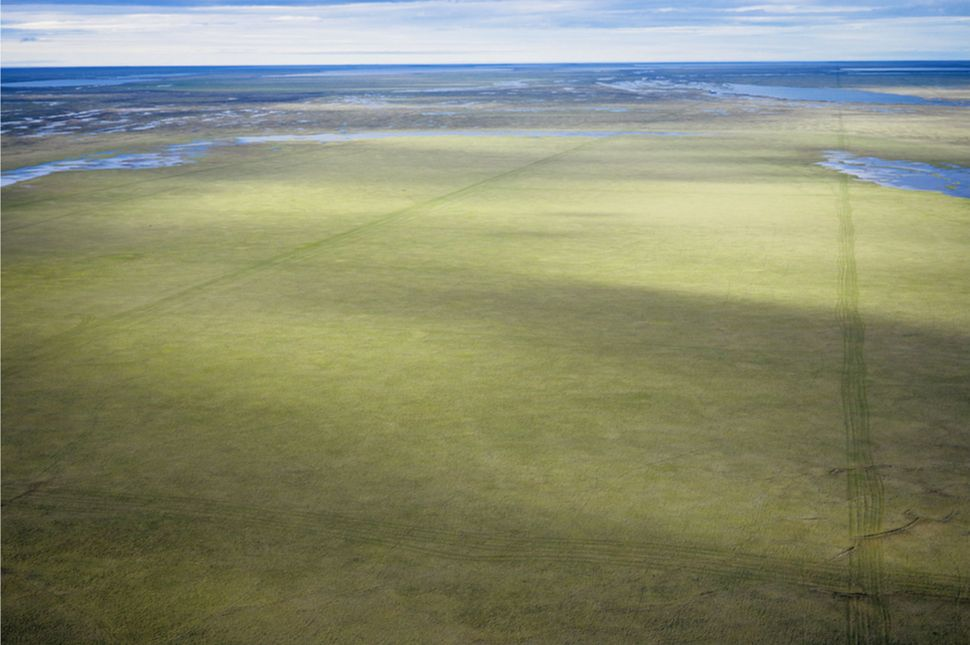 This 2006 photo shows seismic tracks on the tundra near Teshekpuk Lake, Alaska.