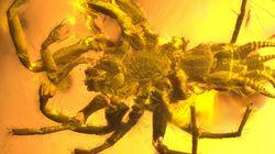 꼬리 달린 1억 년 된 거미가