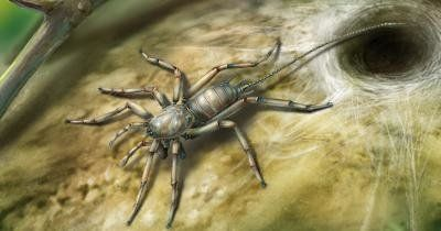 100 Million Year Old Spider With A Tail Is Worse Than We Could Have
