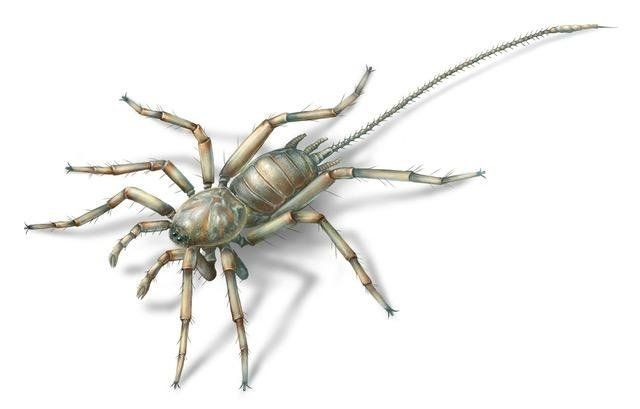Fossilised spiders with 'tails' found in Myanmar rainforest