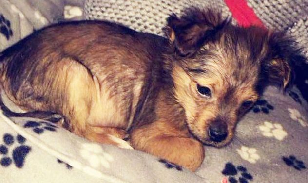 Man charged after puppy killed with hammer