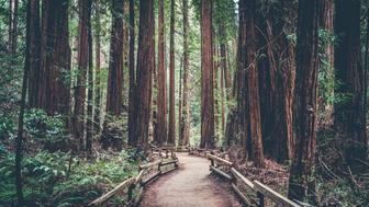 Exploring the Redwoods near San Francisco