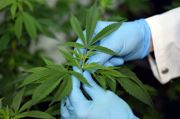 The U.S. still officially considers cannabis a Schedule I substance with no medicinal