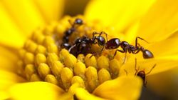 The Humble Ant Could Provide Us With The Next Generation Of Antibiotics