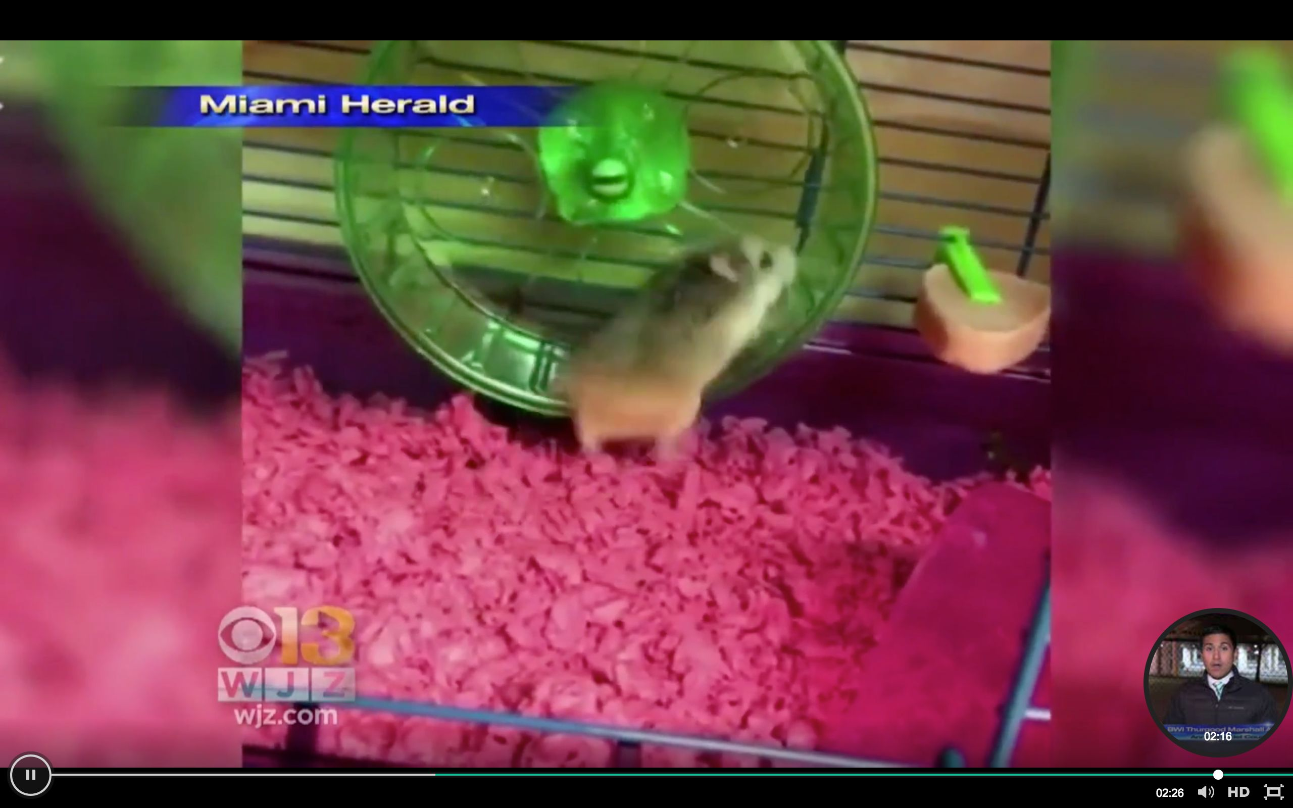 Woman says airline worker told her to flush pet hamster