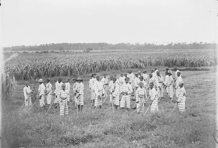 Juvenile convicts at work in the fields, 1903.