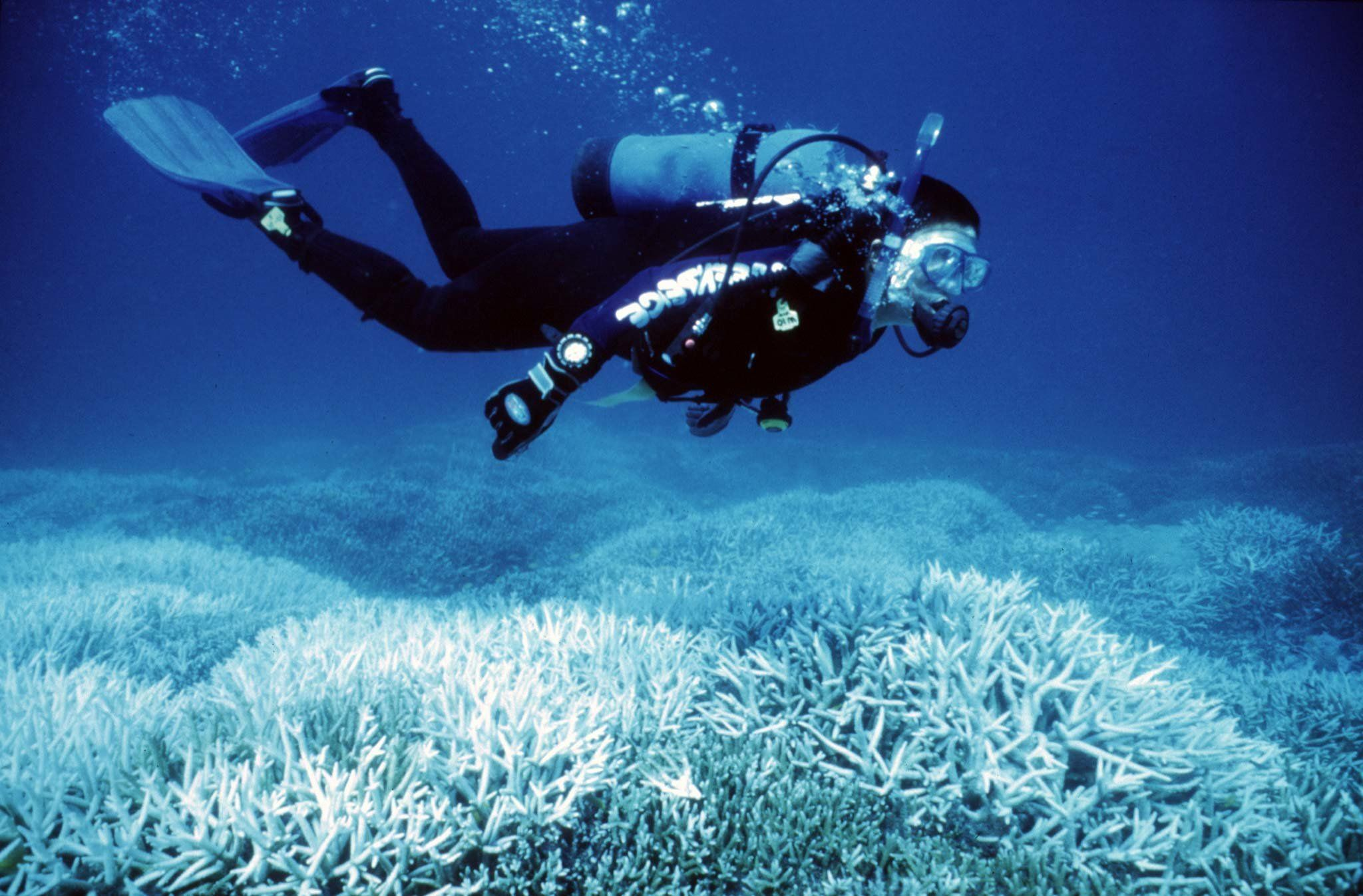 Marine activist Suzanne Kavanagh swims above coral suffering from bleaching on Australia's Great Barrier Reef. The world's largest coral structure is experiencing its worst ever case of bleaching, which scientists fear could threaten its fragile marine environment. Picture taken 25APR98.  REUTERS/Handout