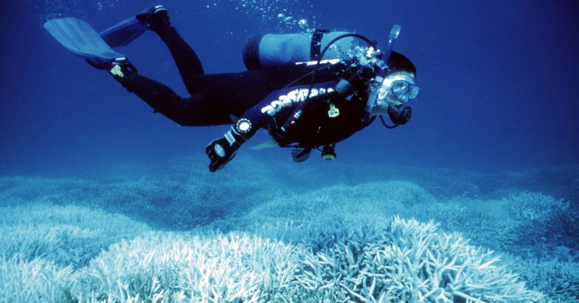 """Coral Scientists Eye 'Radical Intervention' To Save The World's Reefs: """"The dire situation is here now,"""" said the coordinator of NOAA's Coral Reef Watch."""