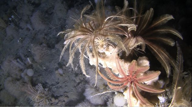 Explorers Come Up With Amazing Photos Of What Lies Beneath Antarctic
