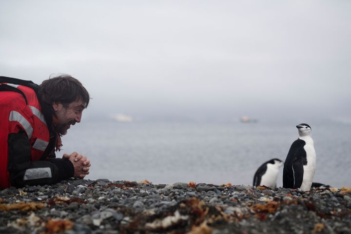 Bardem horns in on Harbour's action and gets to know some chinstrap penguins.