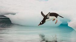 남극에 관해 알아두면 좋은 상식 11가지
