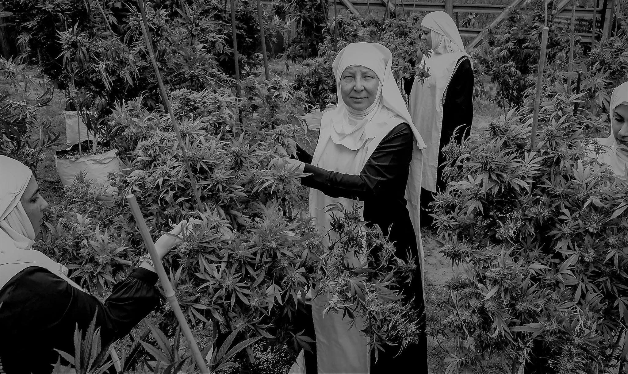 NUNS BELIEVING IN THE HEALING POWER OF CBD OIL, SELL CBD PRODUCTS