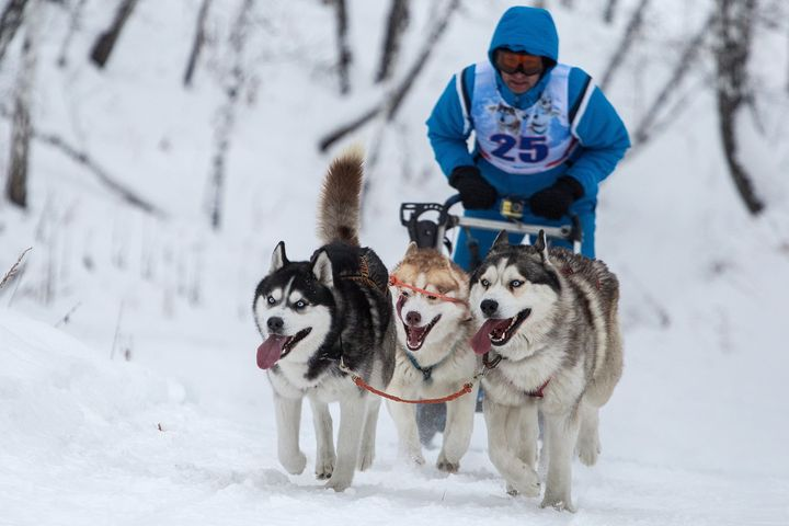 A sled dog race in Russia in January 2018.